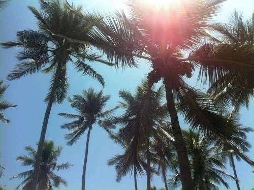 Palm Trees Beach Thailand South Sea