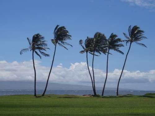 Palm Trees Hawaii Vacations Wanderlust Molokai