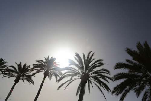 Palm Trees Palm Beach Spain Sun Sunlight Summer