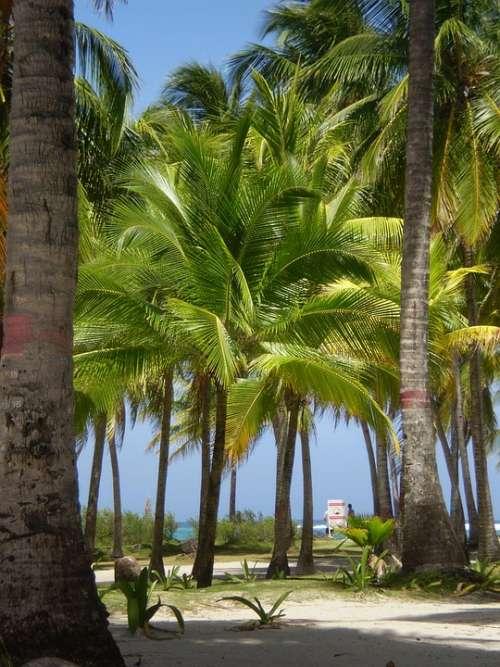 Palmas Landscape Colombia San Andrés Islands