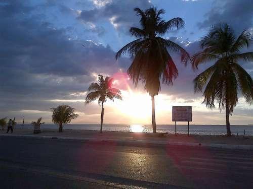 Palms Beach Sunset Landscape