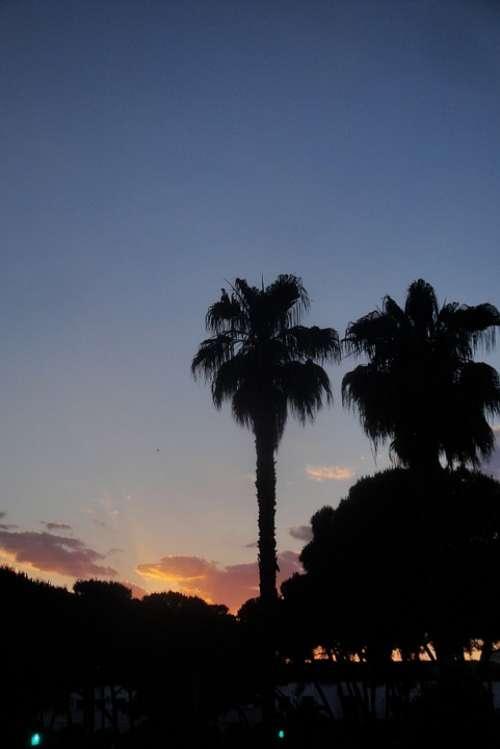 Palms Trees Pine Sunset Dusk Sky Backlight