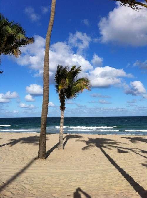 Palms Beach Sand Sky Ocean Clouds Florida