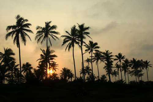 Palms Veracruz Sunset Twilight Trees
