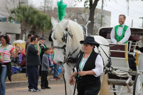 Parade Horse Carriage Ride Irish Parade Festival