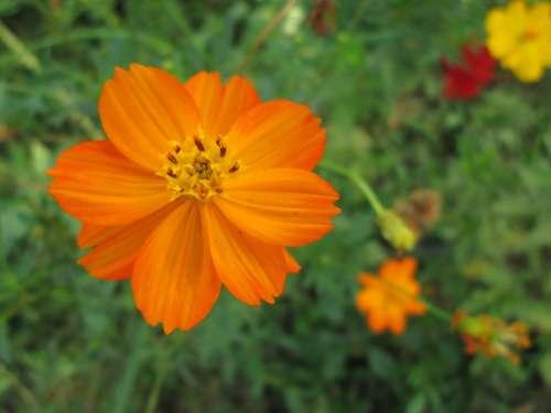 Park Flower Garden Plant Orange