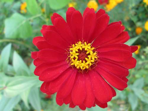 Park Flower Garden Plant Red