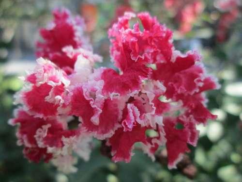 Park Flower Garden Plant Pink