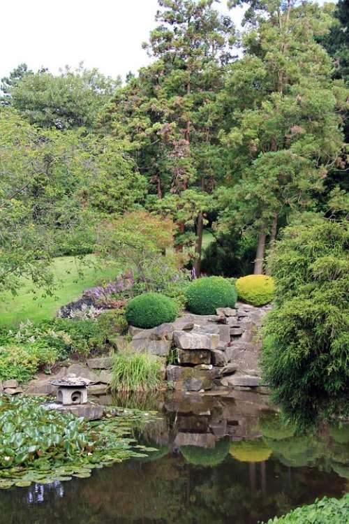 Park Pond Lake Japan Tree Plant Green