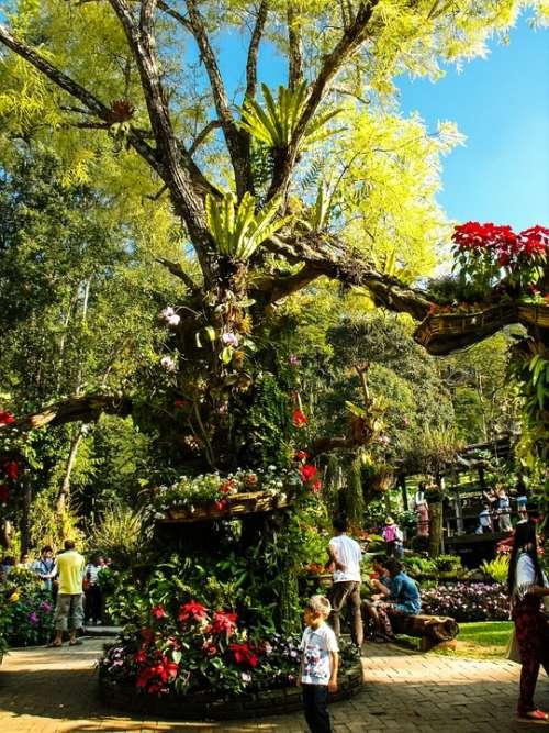 Park Blumenlanschaft Flowers Old Tree