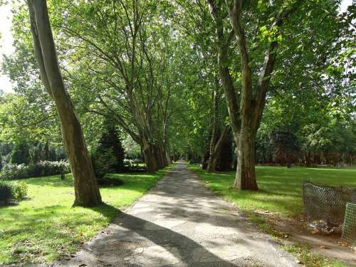 Park Away Tree Trees Green Rest Idyll