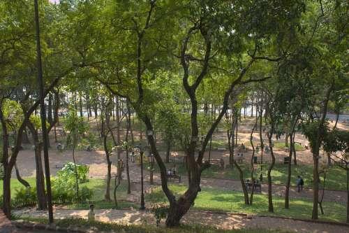 Park Landscape Green Trees Outdoors Garden Urban