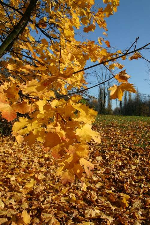 Park Forest Autumn Tree Foliage October Nature