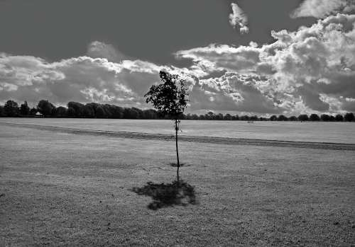 Park Grass Space Tree Trees Sky Black White