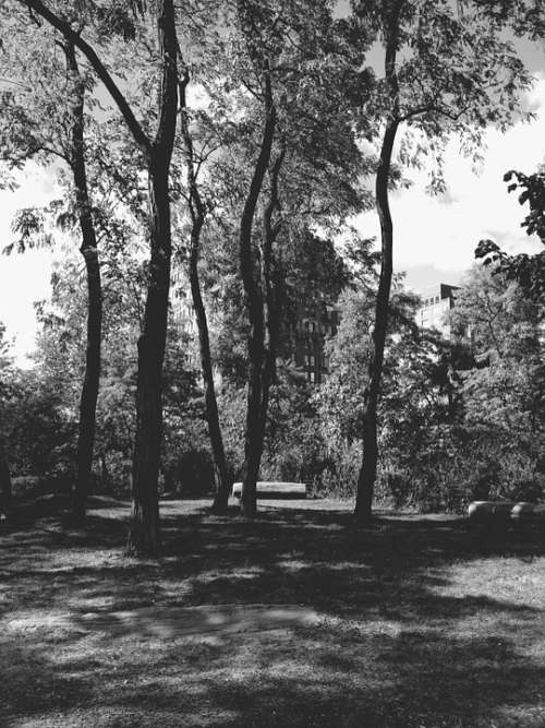 Park Black And White Monochrome Nature New York