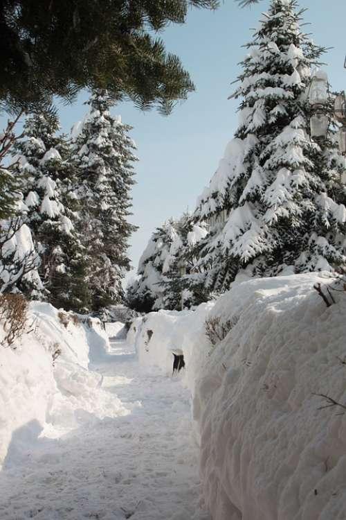 Park Snow Winter Alley Snowy Alleys