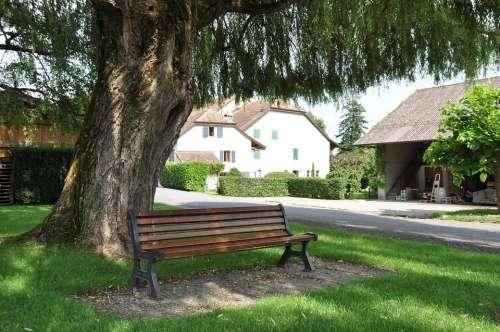 Park Bench Bench Seat Tree Laconnex Geneva