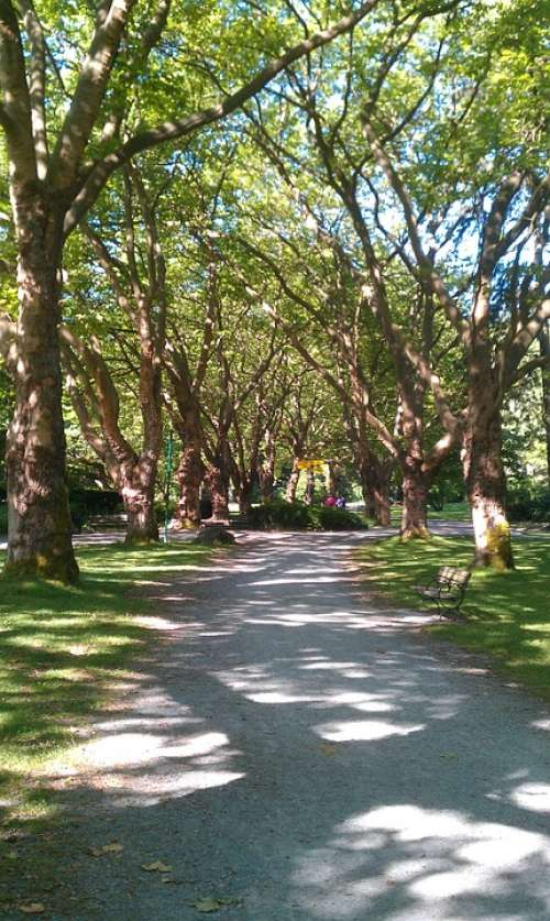 Park Walk Trees Nature Landscape Summer