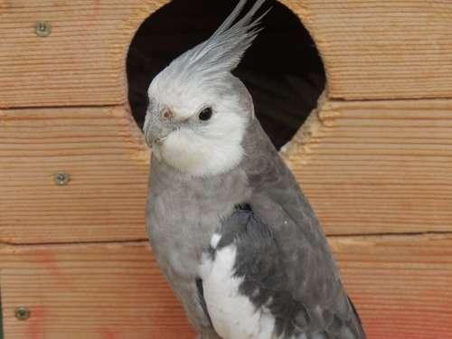 Parrot Cockatiel Bird Cage Gray White