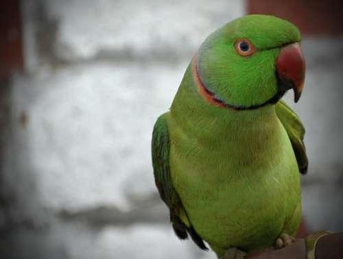 Parrot Green Beak Bird Animal Feather Nature