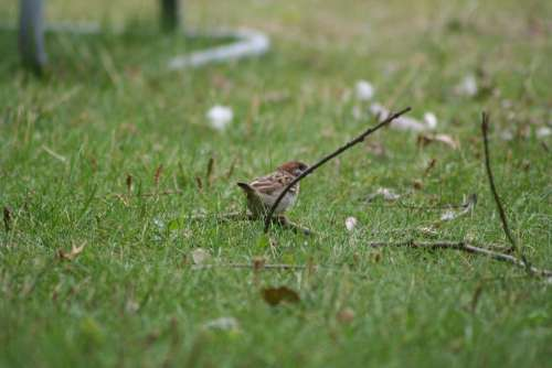Passer Domesticus Bird Sparrow Nature Outside