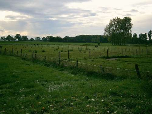 Pasture Meadow Cow Cows Animal Landscape Fence