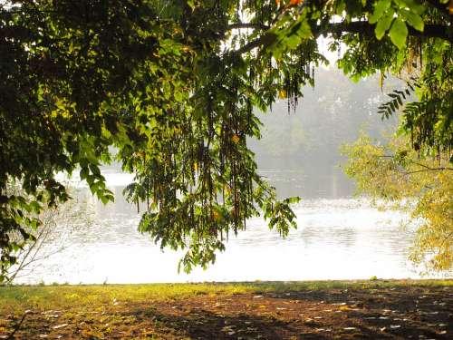 Pasture Main Main Banks Bank River Morgenstimmung