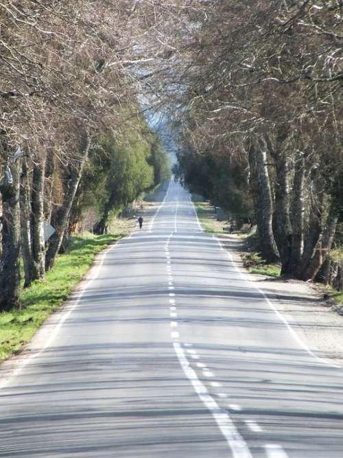 Path Street Via Field Rural