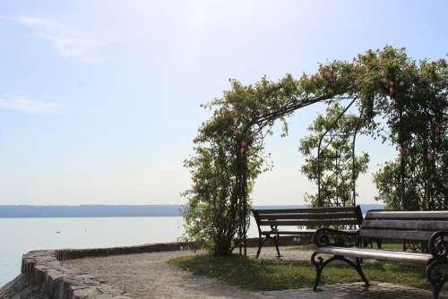 Pavilion Lake Bank Roses