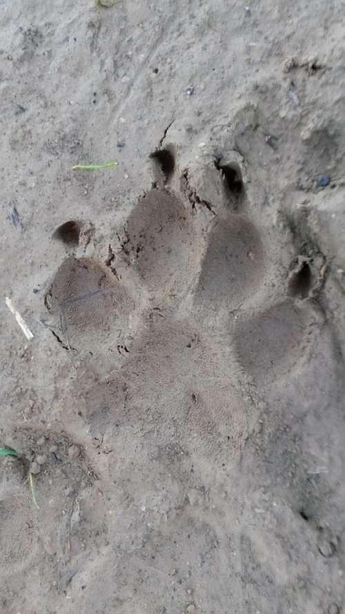 Paw Reprint Traces Dog Animal Tracks