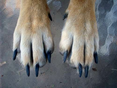 Paws Dog Animal Pet Puppy Canine Foot