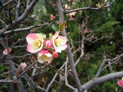 Peach Blossom Beautiful Views