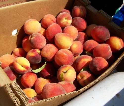 Peaches Market Organic Bushel Ripe Produce