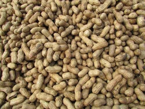 Peanut Ground Nuts Bangalore India