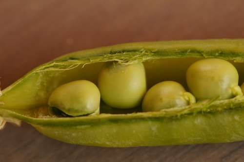 Peas Pea Pod Fresh Pod Green Vegetables Harvested