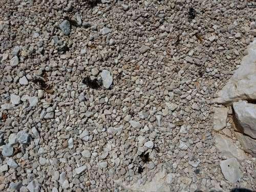 Pebbles Shore Rocks Texture Stone Beach Nature