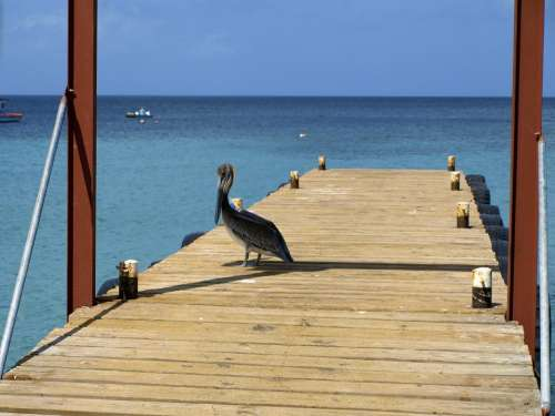 Pelikan Sea Curacao Westpunt Web Fishing Port