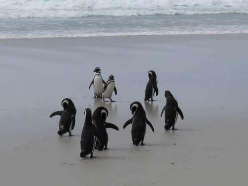 Penguins Antarctica Southern Ocean Beach