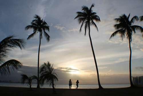People Palms Sunset Tropical Silhouette Sky Sun