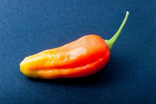 Pepper Chili Orange Bright Sharp Pepper Crop Eat
