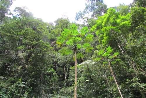 Peru Jungle Tarapoto