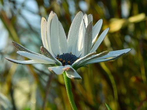Petals Flowers Drops Dew Water Landscapes Nature