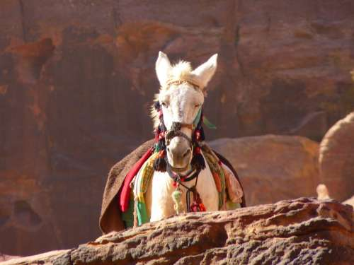 Petra Jordan Vacations Travel Middle East Horse