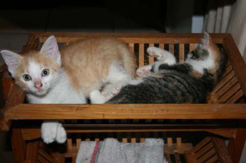 Pets Kittens Sleep Basket