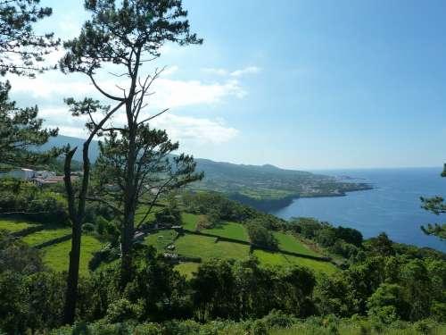 Pico Azores Atlantic Ocean Tree Landscape Island
