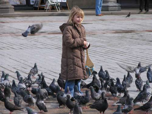 Pigeons Space Girl Child Feed Birds Eat Peck
