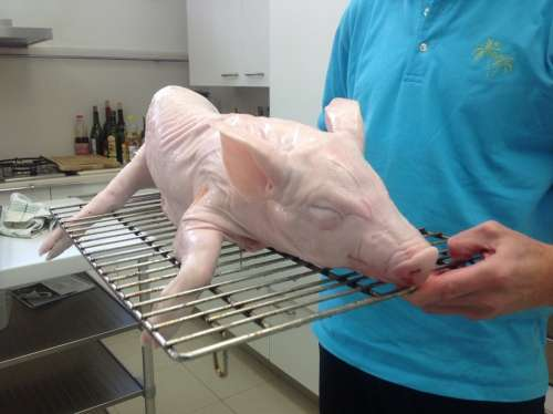 Piglet Pig Animals Food Meat