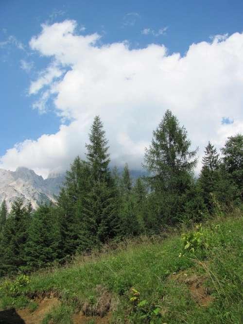 Pine Mountain Cadore Belluno Borca Val De Cuze