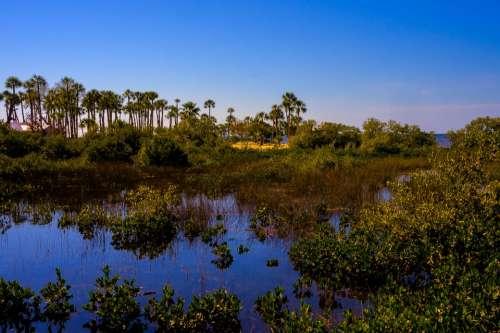 Pine Island Florida Marshlands Palm Trees Tropics