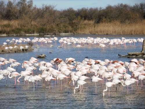 Pink Flemish Nature Animals
